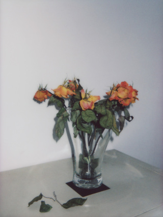 Broken Flowers, No.8, 135x100cm, 2018