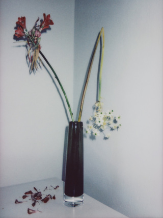 Broken Flowers, No.14, 135x100cm, 2018